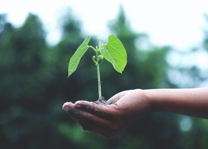Foto einer Hand, die eine junge Pflanze hält